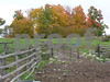 farm yard in fall