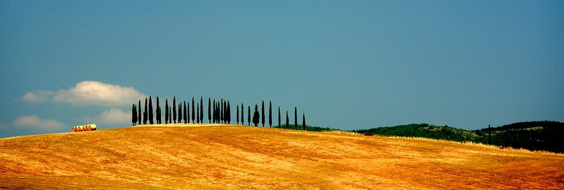 Umbrian cypress trees.
