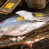 TOKYO. CHUO. TSUKIJI FISH MARKET. TUNA [2]