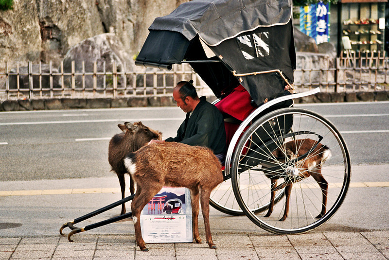 MAN + DEER. MIYAJIMA. HIROSHIMA.