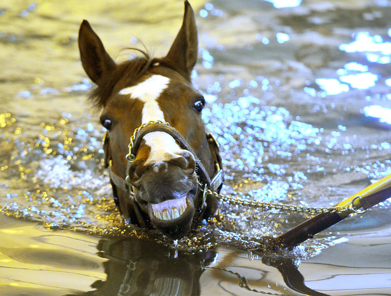 JACK HALEY/MESSENGER POST<br /> Nozzy Minogue works out in the 15-foot pool at Finger Lakes Race Track.