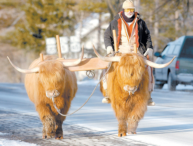 jhox - Fridays single digit temperatures were just right for this mode of transportation as Joe Herrgesell of Pittsford rides his Scotch Highlander down Country Road 37 in West Bloomfield. He said Ren (right) and Stimpy like this cold weather.