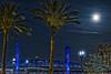 Moon Palms Moon