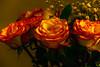 Hot Bedroom Loving Rose
