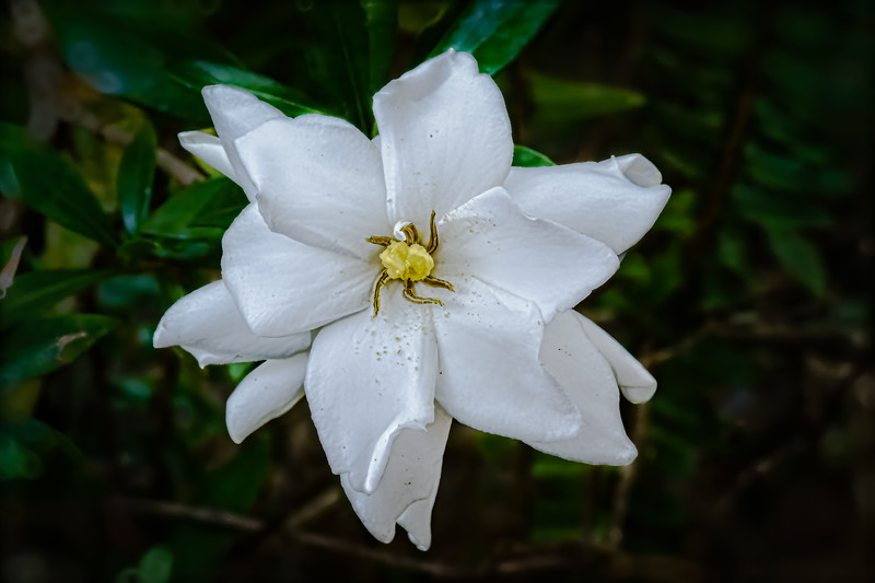 May Flower from April Showers