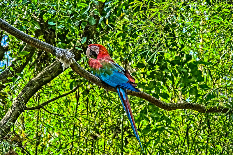 Fluorescent Scarlet Macaw