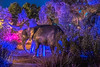 Elephants in Living Color