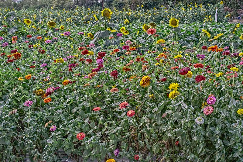 Flower Garden II