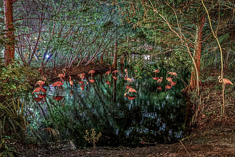 Caribbean Flamingo at Night