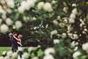 jacqueline kristopher wed 75