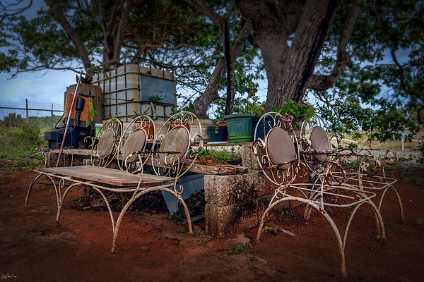 Under A Tree We Sit