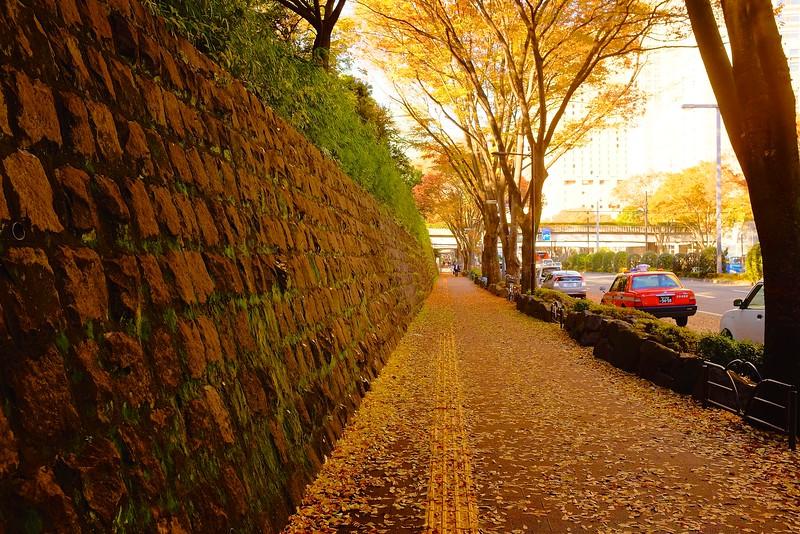Shinjiku Color - Tokyo, Japan