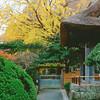 Rich Colors at Hokoku-ji - Kamakura, Japan