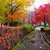 A Neighborhood Park #1 - Tokyo, Japan