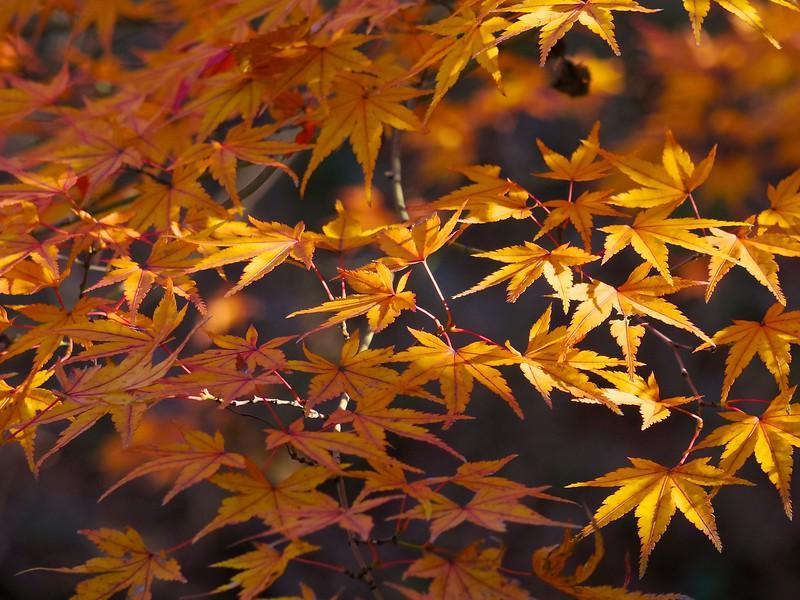 2014 Rikugien Garden Fall Color #6 - Tokyo, Japan