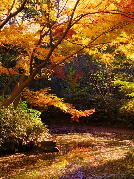 2014 Rikugien Garden Fall Color #3 - Tokyo, Japan