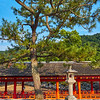 The Pine Tree and Lantern - Miyajima, Japan