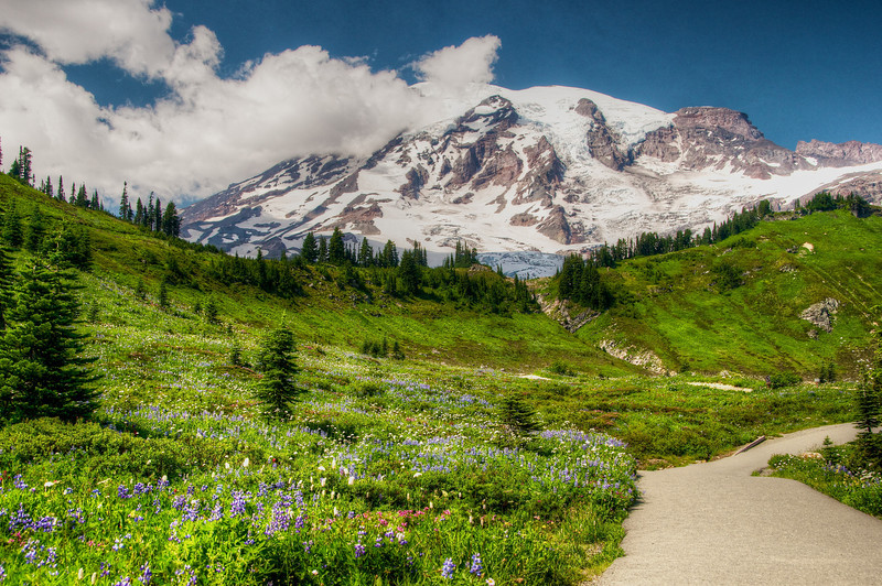 "In 1889, John Muir described Mount Rainier's Paradise area as ""...the most luxuriant and the most extravagantly beautiful of all the alpine gardens I ever beheld in all my mountain-top wanderings."" This image captures only a part of the magnificence of Mount Rainier National Park as the winding trail leads hikers towards Camp Muir. Photo by Jared Rogers"