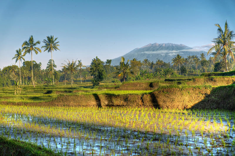 Rice terraces at Licin