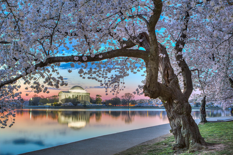 Cherry Blossom Sunrise