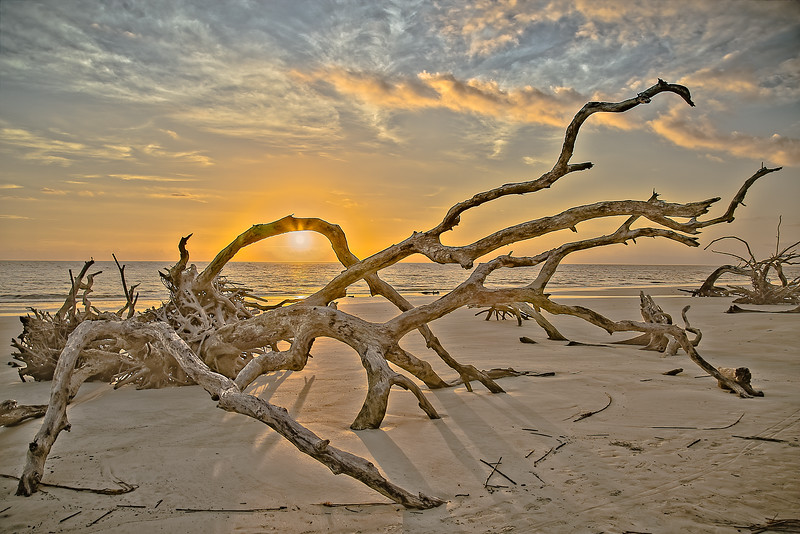 Natures Heat in Driftwood Eye