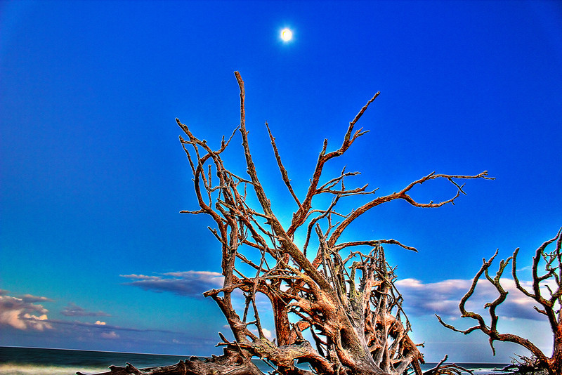 Driftwood at dusk
