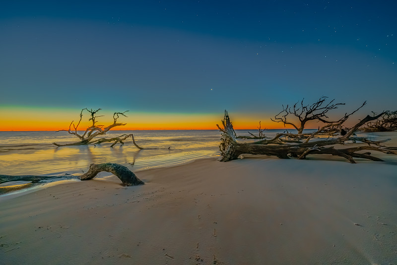 Driftwood by Dawns Early Light