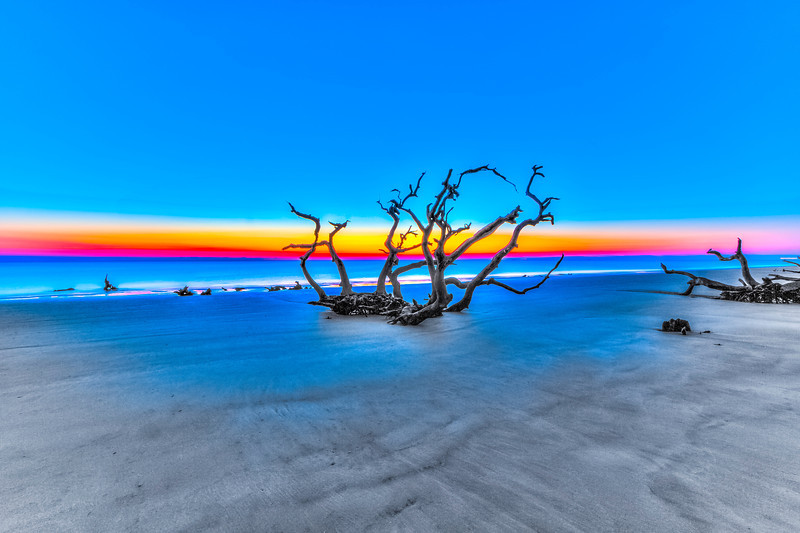 Sunrise Beach Tree