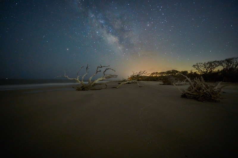 Driftwood with Milky Way