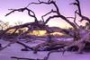 Sunset on driftwood