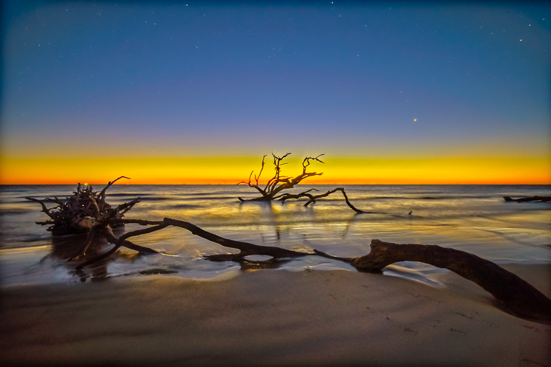 Driftwood Blue Hour