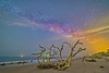 Octopus Driftwood Tree Stretching to Catch the Colorful Universe