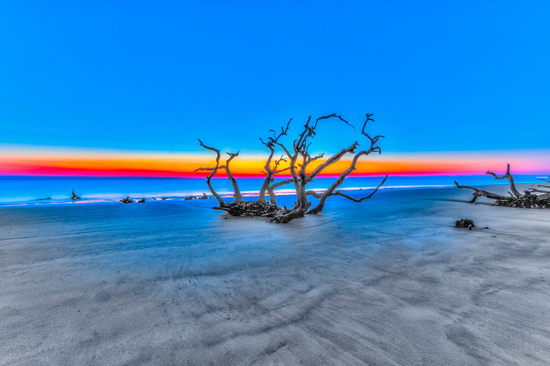 Sunrise Beach Tree-2