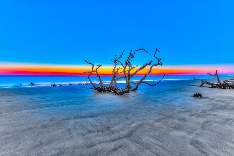Sunrise Beach Tree-2