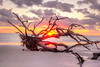 Sunrise Driftwood Beach Fallen Tree