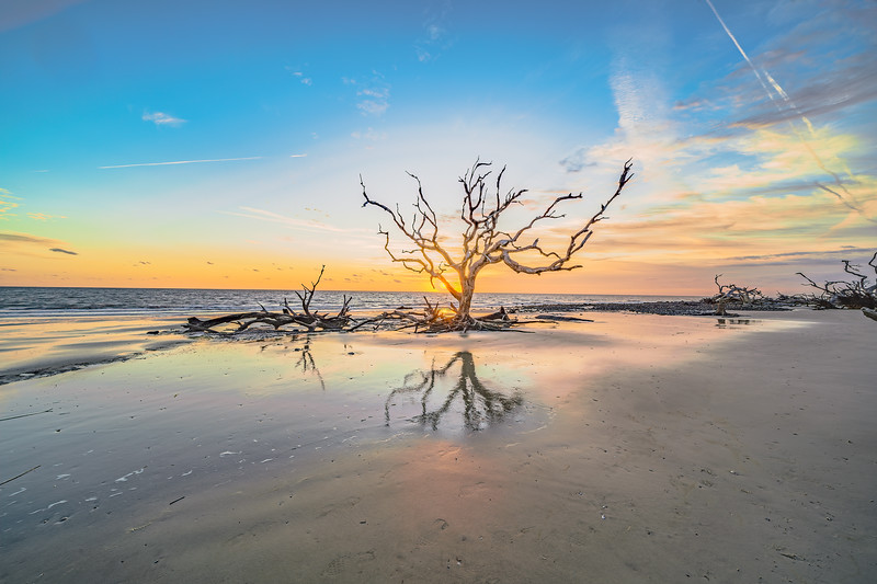 Old Oak with Beach and Sky