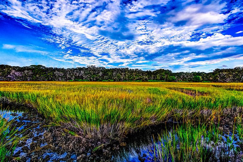 Marsh Bike Path View