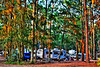 camp site Jekyll Island