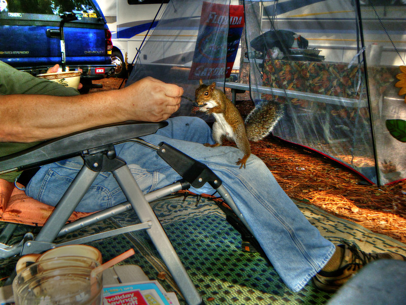 Squirrel Hunting in the campground. Jekyll Island Ga. Campground