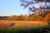 Marsh Sunset back