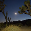 Joshua Tree Moonlight