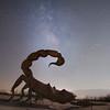 Scorpius Scorpion