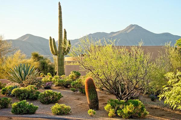 American Desert Garden