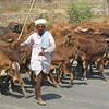 Ranthambhore to Agra c  (167)_2