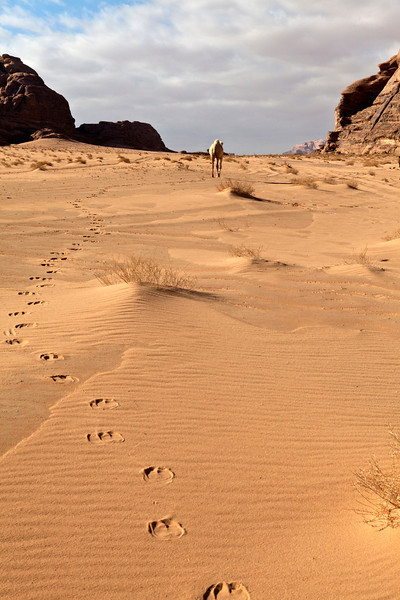 WADI RUM DESERT. SOUTH JORDAN. WALKING IN THE FOOTSTEPS OF THE WHITE CAMEL. JORDAN.