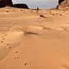 WADI RUM DESERT. SOUTH JORDAN. WALKING IN THE FOOTSTEPS OF THE WHITE CAMEL. JORDAN.