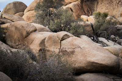 Another Joshua Tree face.