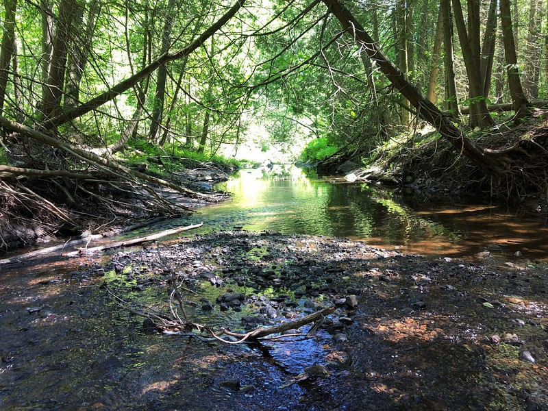 June 6 Scanlon Creek