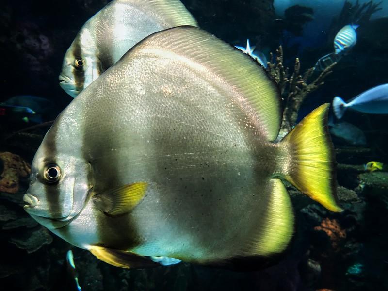 21 July Aquarium