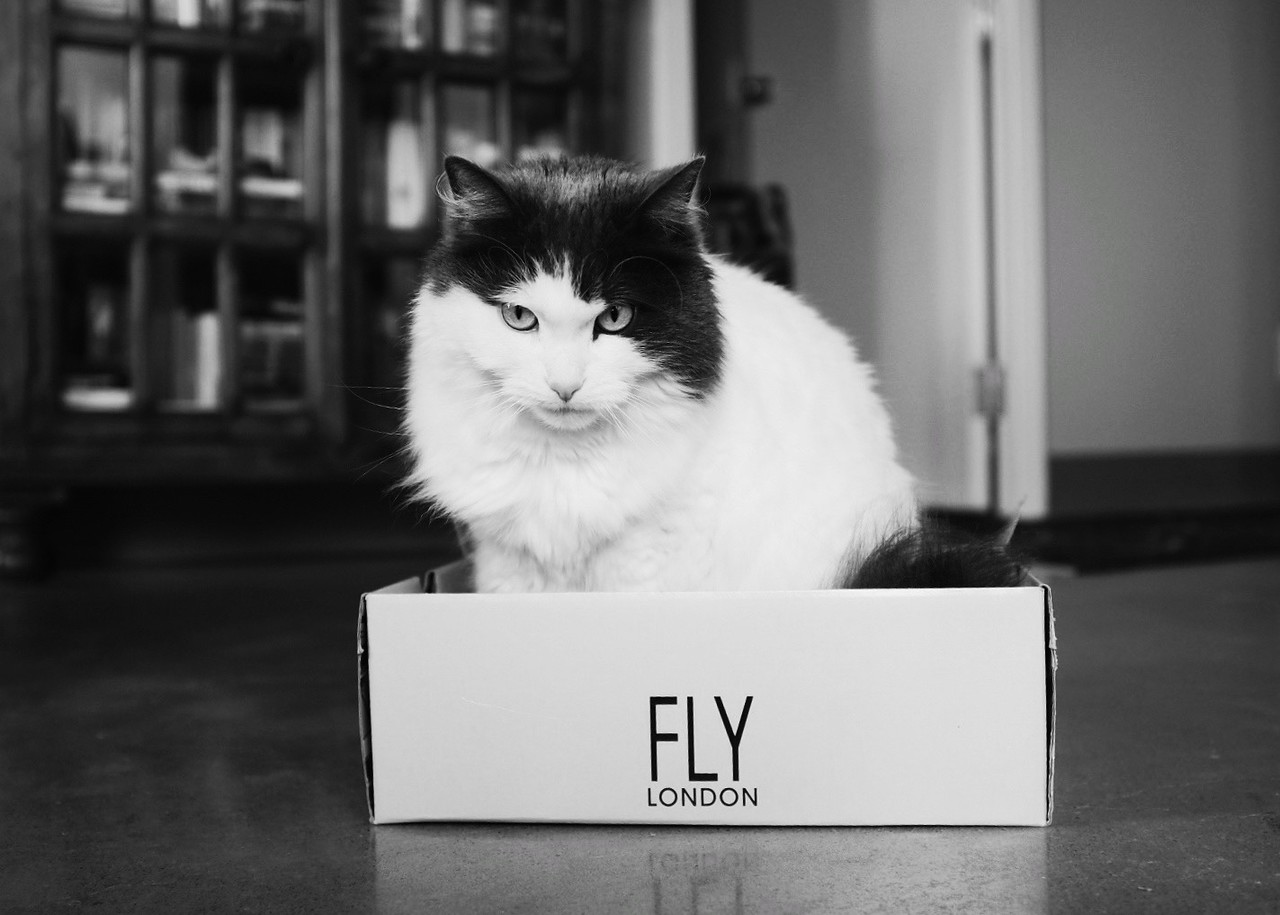 April 18 Toronto<br /> <br /> My cat is fly. It says so on the box.